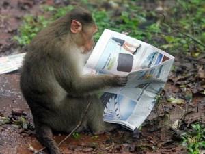 scimmia intellettuale