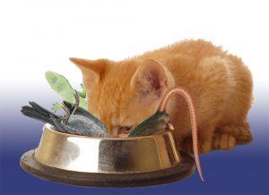 Cibo per gatti al gusto di topo salamandra e uccellino.